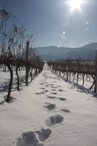 tinhorn_winter_096